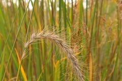 Поле одичалой травы Стоковые Изображения RF