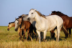 поле пасет зеленое лето лошадей табуна стоковое фото rf