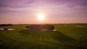 Поле падиа Стоковая Фотография RF