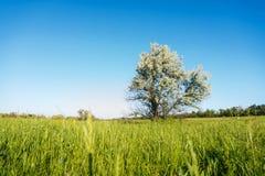 Поле покрытое с травой, деревом Стоковые Изображения RF