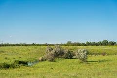 Поле покрытое с травой Стоковая Фотография
