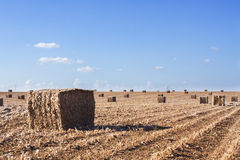 Поле после хлебоуборки Стоковые Фото