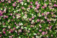 Поле полевых цветков Стоковое Фото
