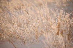 Поле под сильным снегопадом Стоковые Изображения