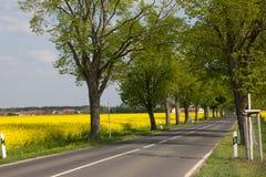 Поле проселочной дороги и рапса Стоковая Фотография RF