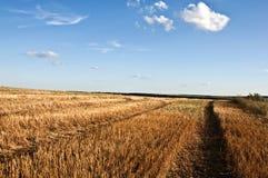 Поле пшеницы в Украине Стоковые Фото
