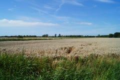 Поле пшеницы в Франции стоковое изображение rf