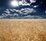 Поле пшеницы, красивый заход солнца, облака Стоковые Изображения RF