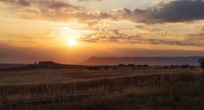 Поле пшеницы на заходе солнца Стоковое Изображение RF