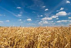 Поле пшеницы против неба Стоковое Фото