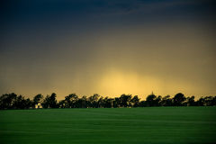Поле рапса в заходе солнца Стоковые Изображения