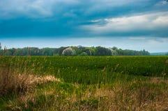 Поле рапса в пасмурной погоде в лете Стоковые Фото