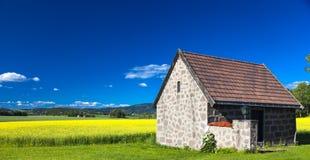 Поле рапса в после полудня Желтые цветки и острословие голубого неба Стоковое Фото