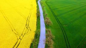 Поле рапса и зерна от вида с воздуха Стоковое Фото