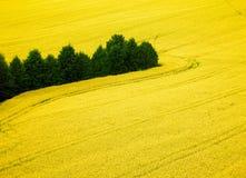 Поле рапса и зеленые деревья от вида с воздуха Стоковое Изображение