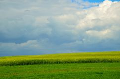 Поле рапса под облачным небом Стоковая Фотография