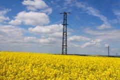 Рапс Oilseed Стоковое Изображение