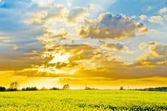 Поле рапсов на заходе солнца Стоковые Изображения
