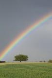 Поле радуги зеленое Стоковые Изображения RF