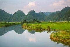 Поле реки и риса в Вьетнаме Стоковое Изображение RF
