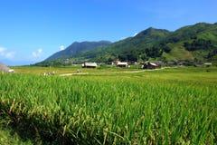 Поле риса Вьетнама Стоковое Изображение