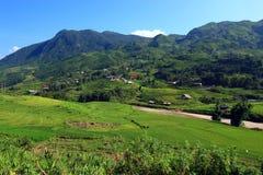 Поле риса Вьетнама Стоковые Фотографии RF