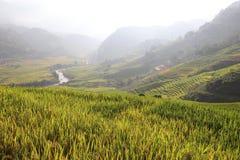 Поле риса, Вьетнам Стоковые Фотографии RF