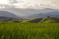 Поле риса в городской местности Стоковая Фотография RF