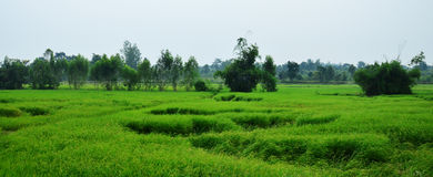 Поле риса и хата соломы на Таиланде Стоковое Изображение RF