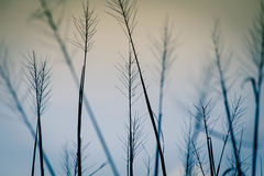 Поле риса на заходе солнца Стоковая Фотография