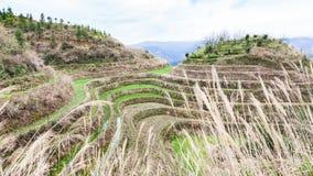 поле риса на террасном холме в стране Dazhai Стоковые Изображения
