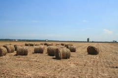 Поле риса после хлебоуборки Стоковая Фотография