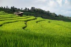 Поле риса, сельский горный вид с красивым ландшафтом Стоковые Изображения