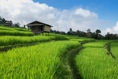 Поле риса, сельский горный вид с красивым ландшафтом Стоковые Фотографии RF