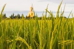 Поле риса с большим Буддой стоковые фотографии rf