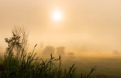 Поле риса с восходом солнца и туманное Стоковое Изображение RF