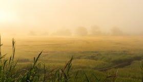 Поле риса с восходом солнца и туманное Стоковые Фотографии RF