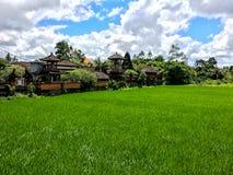 Поле риса с голубым небом около виска Бали Стоковое Изображение