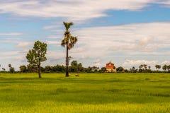Поле риса с деревьями и зданием Стоковые Фото