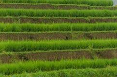 поле риса с много террас Стоковая Фотография RF