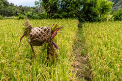 Поле риса с тростником покрывать алтар для предложений, остров Бали, Индонезию Стоковая Фотография