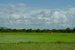 Поле риса с хатой Стоковое Изображение