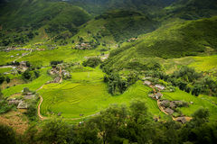Поле риса террасы в северной Вьетнама Стоковые Изображения RF