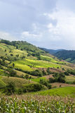 Поле риса террасы на холме Стоковое Фото
