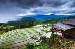 Поле риса террасы Стоковое Фото