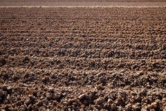 Поле риса Albufera высушенное полями в Валенсии стоковое фото