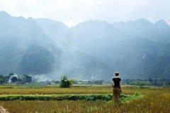 Поле риса ` s Вьетнама Стоковая Фотография RF