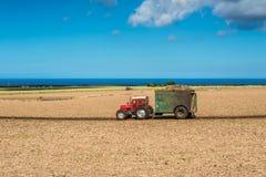 Поле сахарного тростника - аграрный ландшафт Маврикия Стоковое Изображение