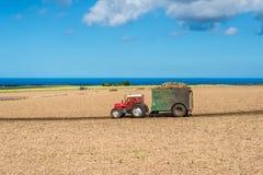 Поле сахарного тростника - аграрный ландшафт Маврикия Стоковое Изображение RF
