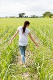 Поле сахарного тростника девушки идя Стоковое Изображение